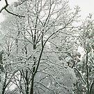 Trees in snowy garb by HELUA