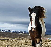 Windy by Hrafnhildur