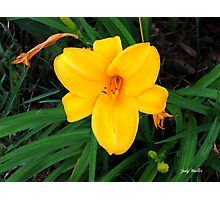 Single Yellow Lily in Watercolor Photographic Print