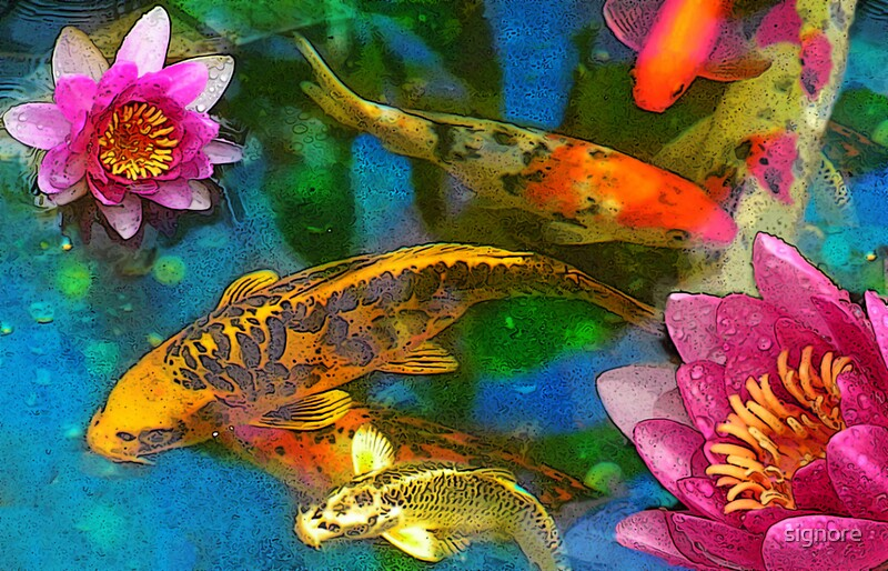Koi play by signore redbubble for Playing koi