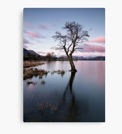 Gale Bay Lone Tree Canvas Print