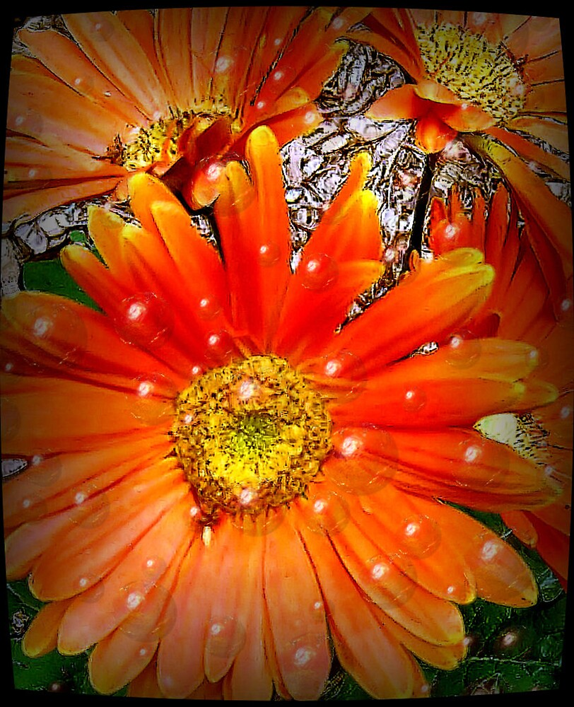 Orange by Erika Benoit