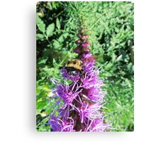 Macro Bumble Bee On Purple Flower Canvas Print