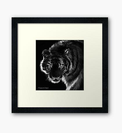 Tigre B&N, featured in Back in Black  Framed Print