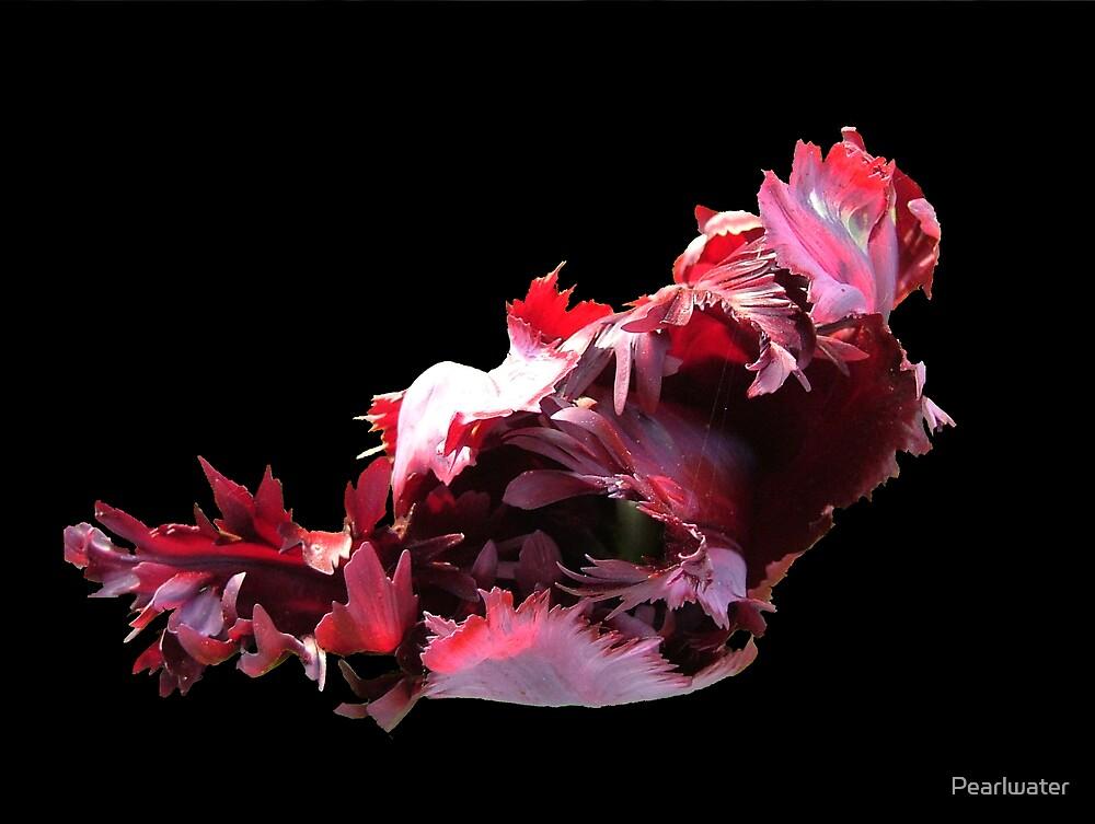 Black tulip on black by Chris Quinlan