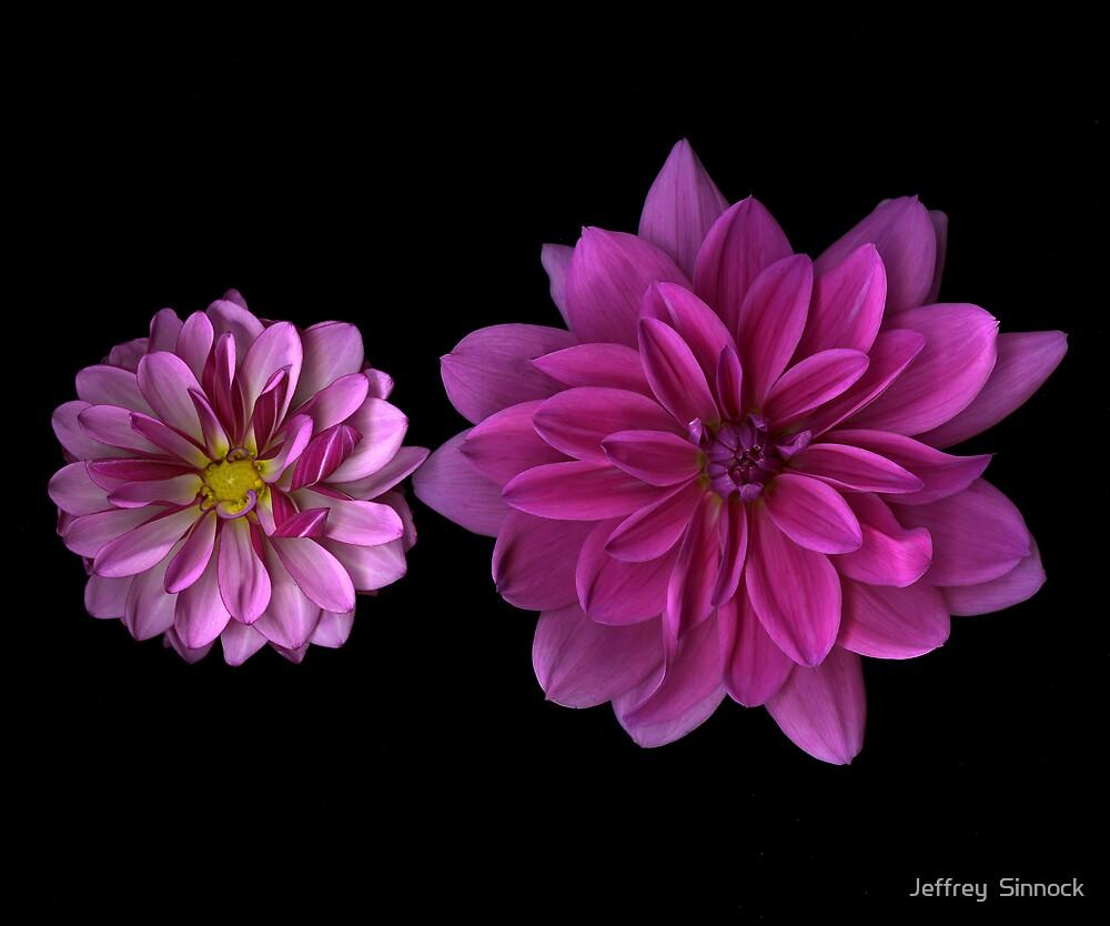 Two Pink Dahlias by Jeffrey  Sinnock