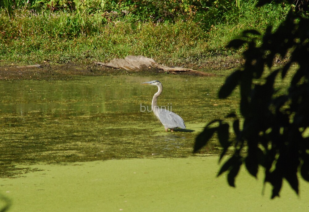 Grey Heron Wading by bunnij
