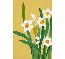 Daffodils from Amphai Photographic Print