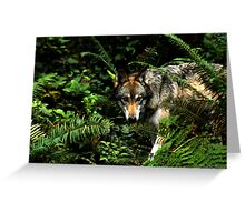 Forest Wolf (Canis lupus) Greeting Card