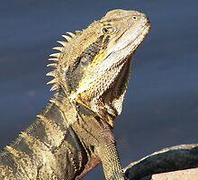Eastern Water Dragon by Linda Swadling