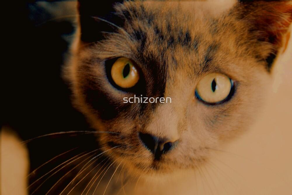 meow meow by schizoren