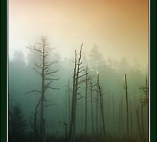 Morning mist in the forest  by Antanas