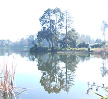 Misty Morning Reflections Hamilton Lake NZ by DavmarPhoto