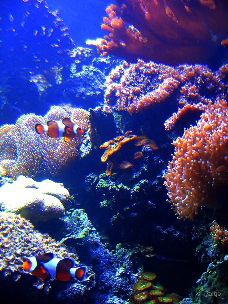Coral world by Paige