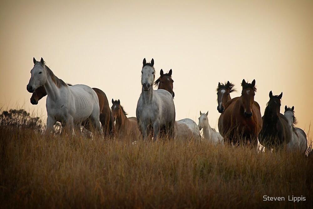 The Horses by Steven  Lippis