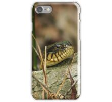 Banded Water Snake iPhone Case/Skin