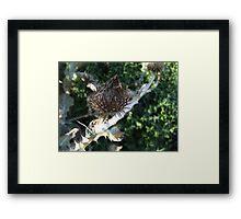 thistle focussed Framed Print