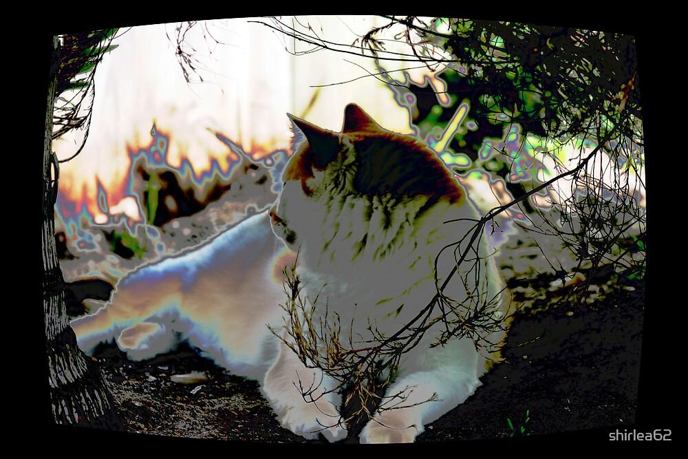 In the garden by shirlea62