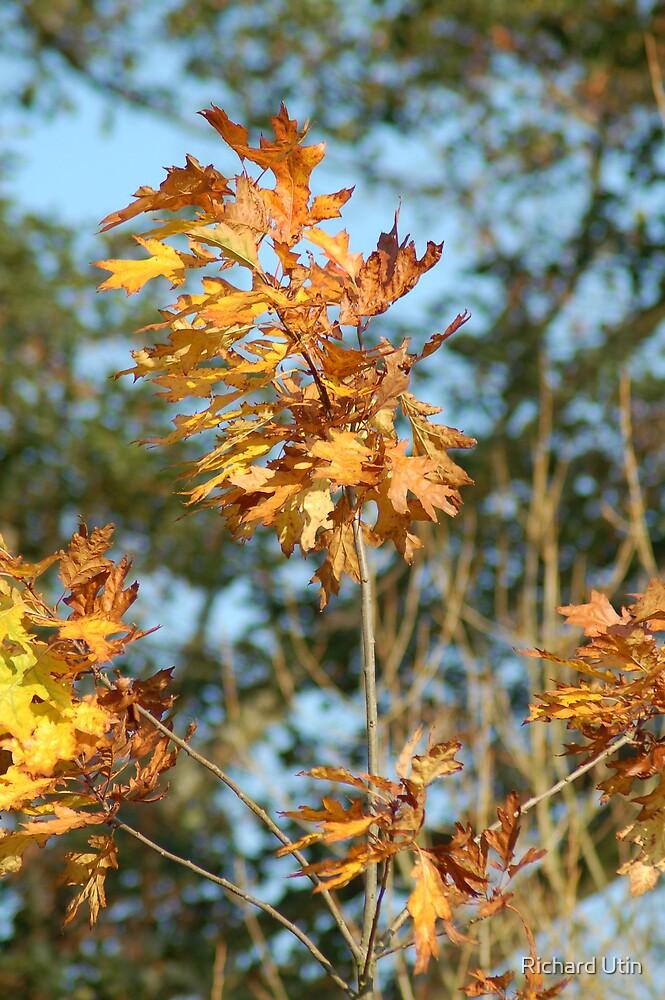 Golden brown by Richard Utin