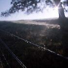 Silver Rain by Kerry McFarland