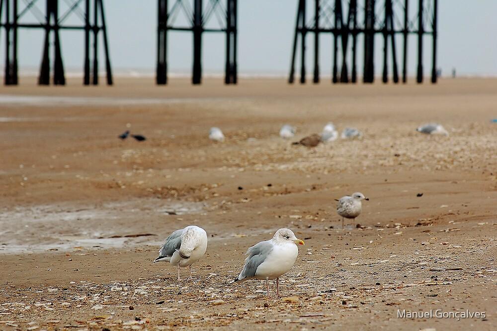 Birds on the beach by Manuel Gonçalves