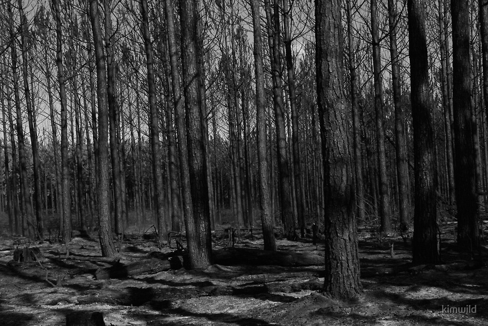 Burnt Forest by kimwild