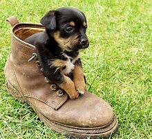 Too Small For Your Boots! by Bruce Halliburton