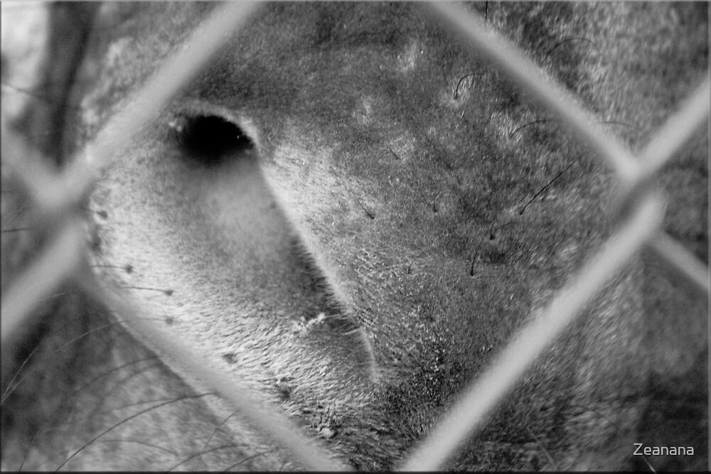Fenced Curiousity by Zeanana