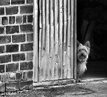 Security by Paul Louis Villani