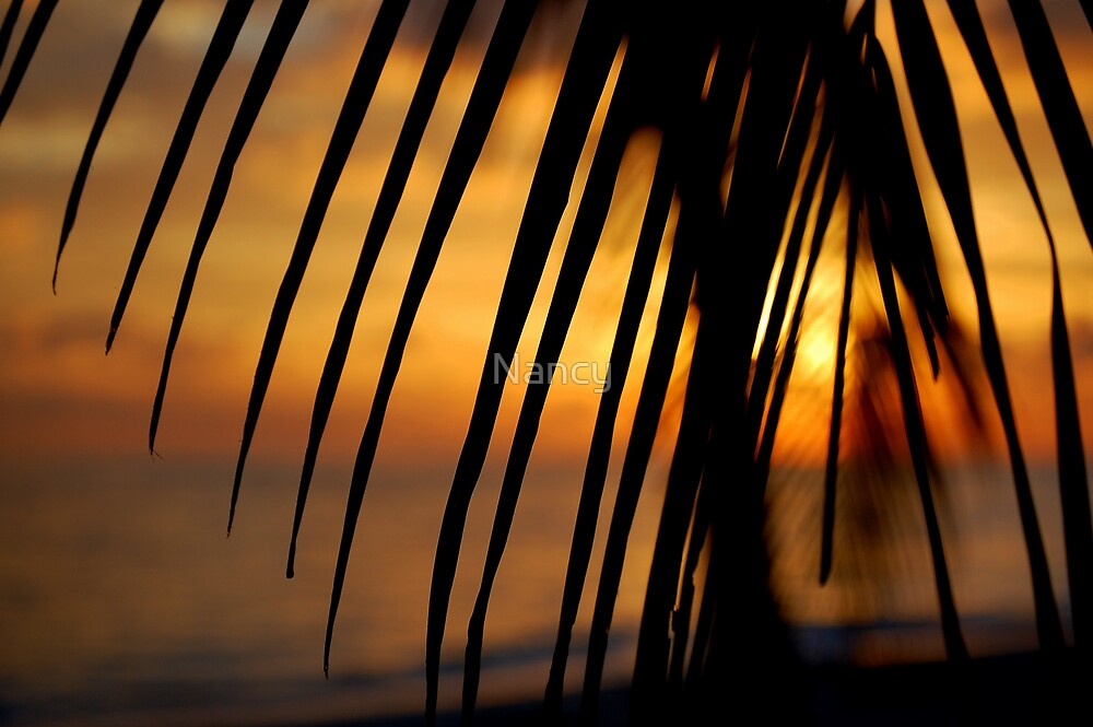 Tropical Sunset by Nancy