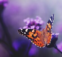 butterfly - in love with you, no 1 by thedannie