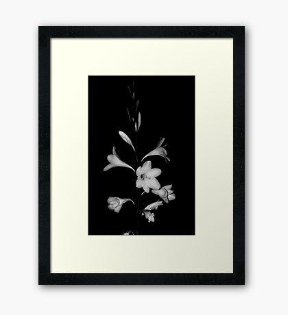 Flowers #3 Framed Print