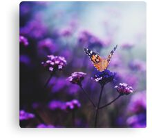 butterfly - in love with you, no 2 Canvas Print