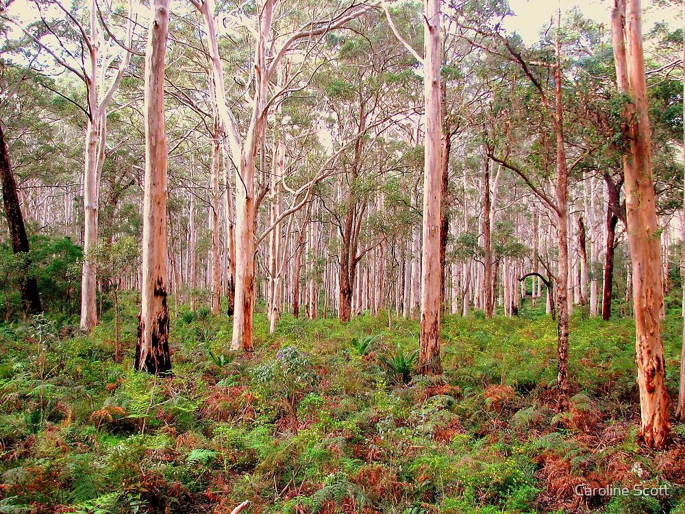 Aussie Bush by Caroline Scott