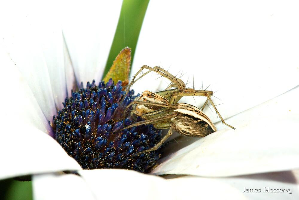 Lynx Spider no 2 by James  Messervy