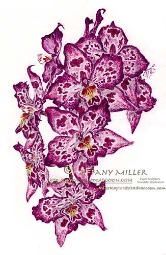 Orchids by Tiffany Miller