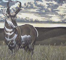 Prairie Flyer by LawrenceJones