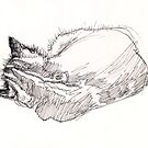 Sleeping kitten, original ink drawing by Roz McQuillan