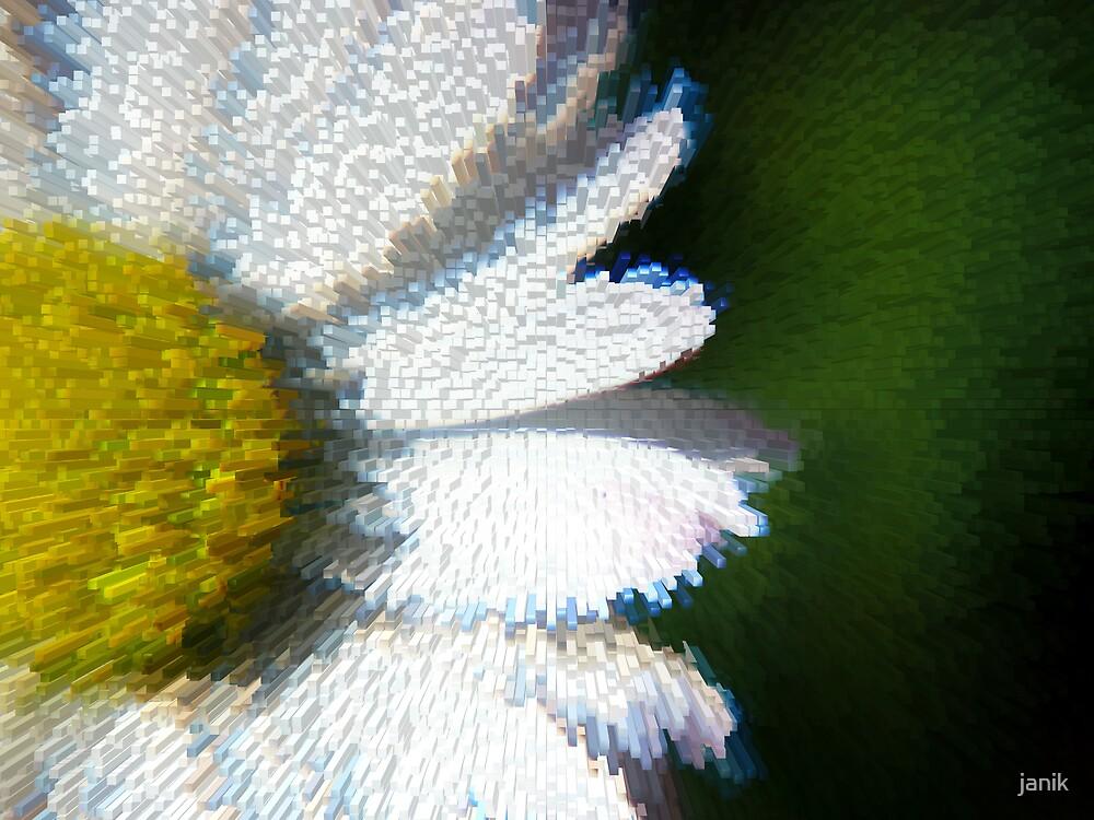 daisy by janik