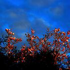 Morning Colors by Chris Faithfull