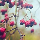 Wet red berries by Vicki Field
