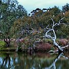 """""""Riverbank"""" by Phil Thomson IPA"""