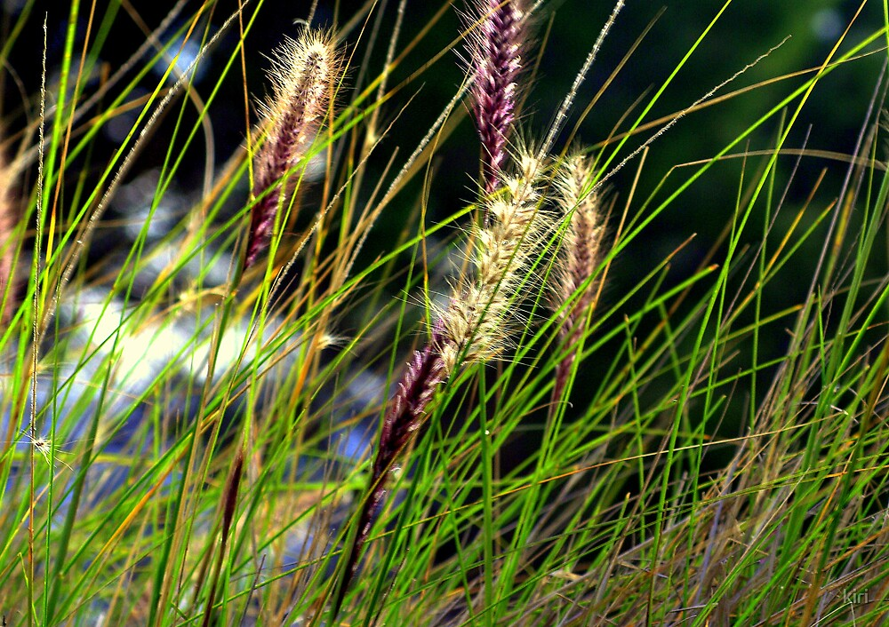 purple grass by kiri