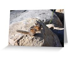 Squirrel Eats Greeting Card