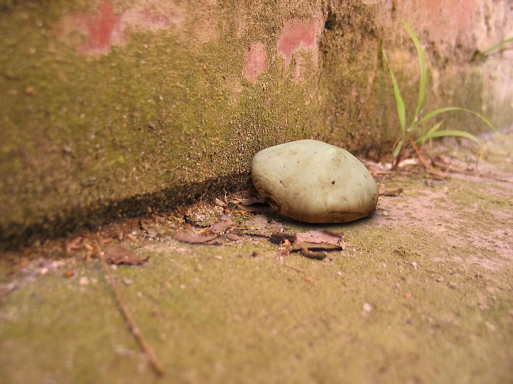 Mushroom by Joel Esler