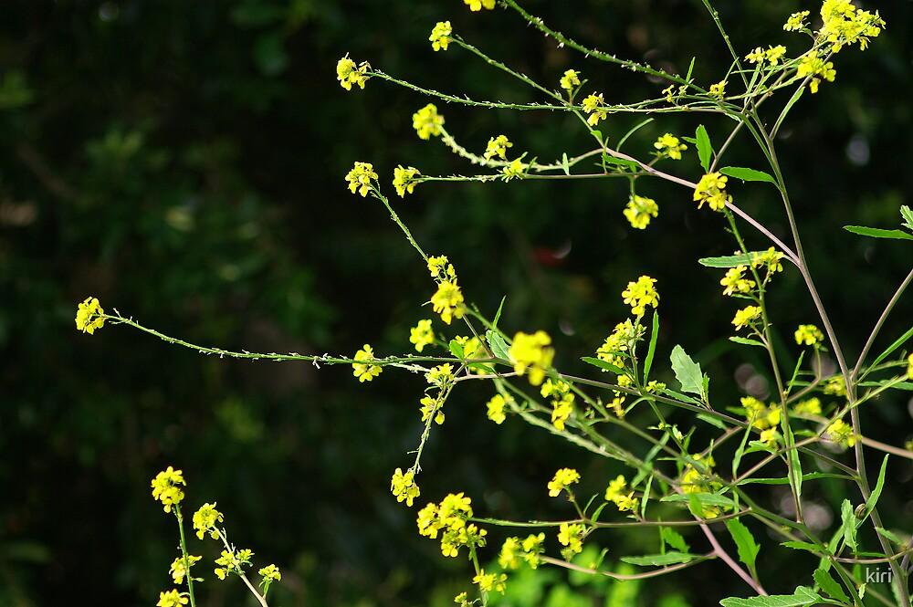 Yellow on black by kiri
