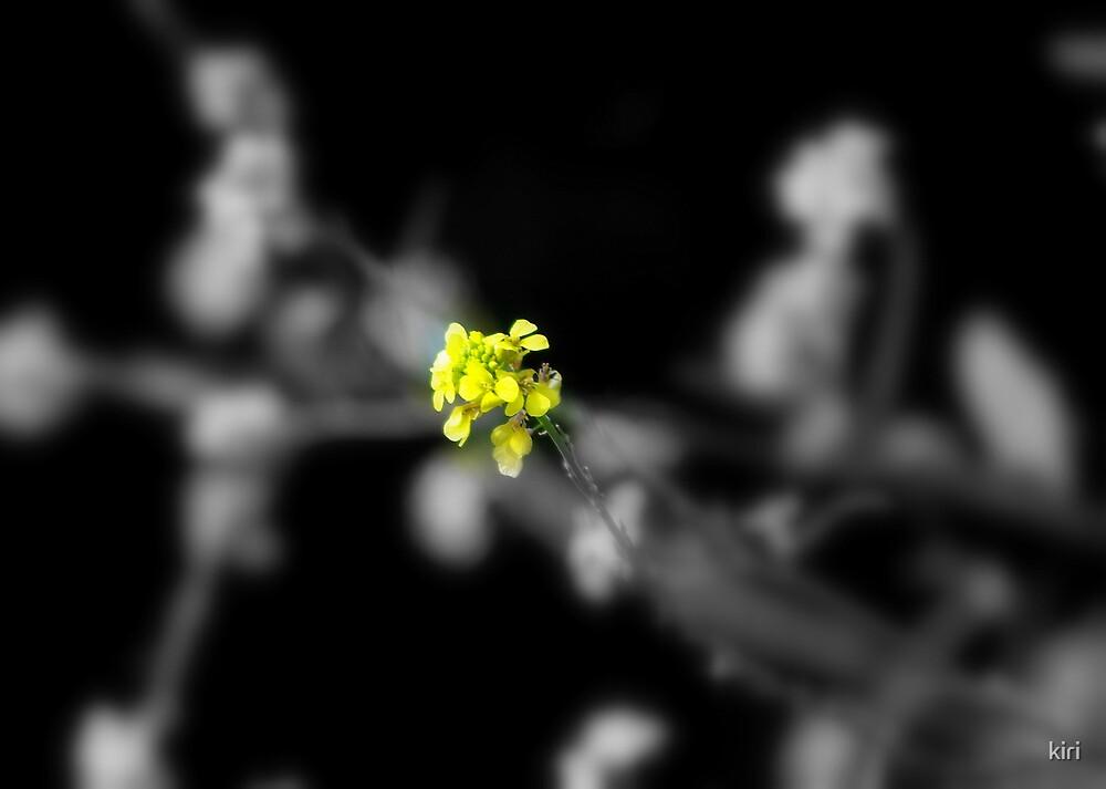 A little yellow by kiri