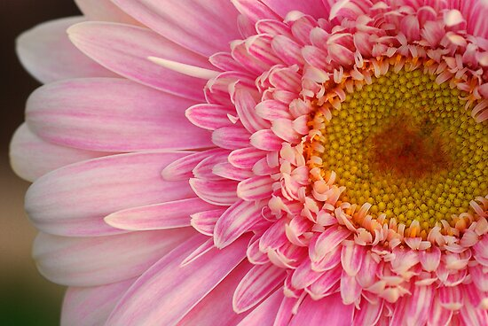 Light Pink by gromol