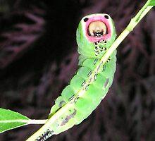 Pussmoth Caterpillar  by manda