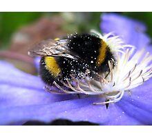 Bumblebee Photographic Print